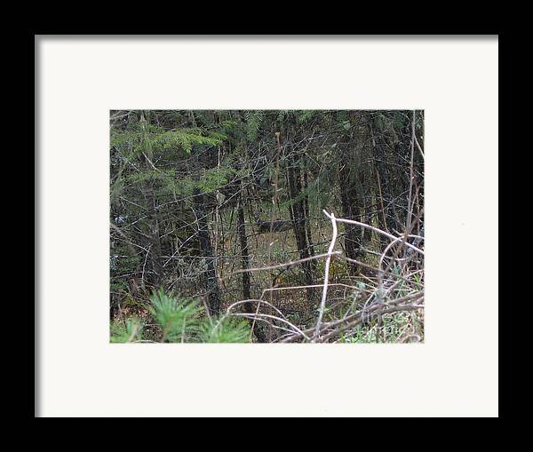 Deer Framed Print featuring the photograph Hiding Out by Joseph Braith