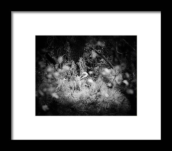 Great Blue Heron Framed Print featuring the photograph Hiding Place by Michael McStamp