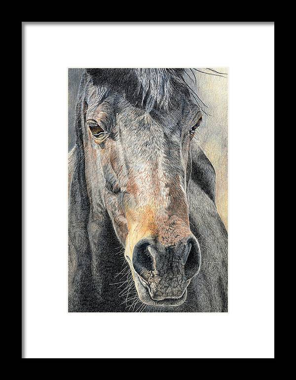 Horse Framed Print featuring the drawing High Desert by Joanne Stevens