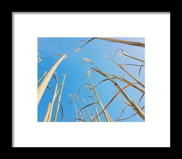 Nature Framed Print featuring the photograph High In The Sky by Olivia Collins