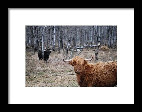Late Autumn Framed Print featuring the photograph Looking Shaggy by W Jeff Gorecki