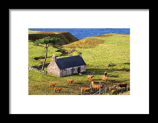 Scotland Framed Print featuring the photograph Highland Cottage With Highland Cattle by John McKinlay