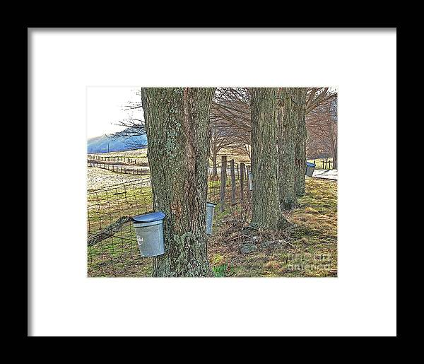 Award Winning Photograph Print Framed Print featuring the photograph Highland County Va Virginia - Monterey - Mcdowell - Maple Harvest by Dave Lynch