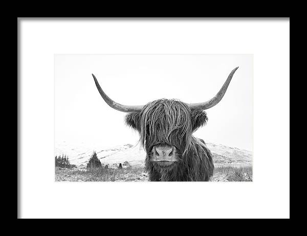 Highland Cow Framed Print featuring the photograph Highland Cow mono by Grant Glendinning