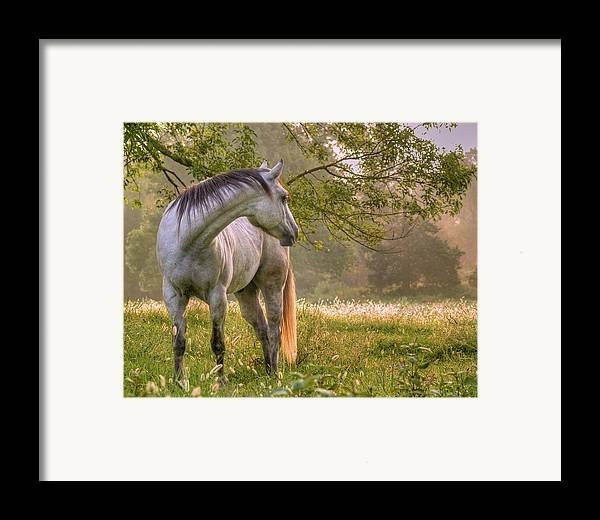Horse Framed Print featuring the photograph Hindsight by Ron McGinnis