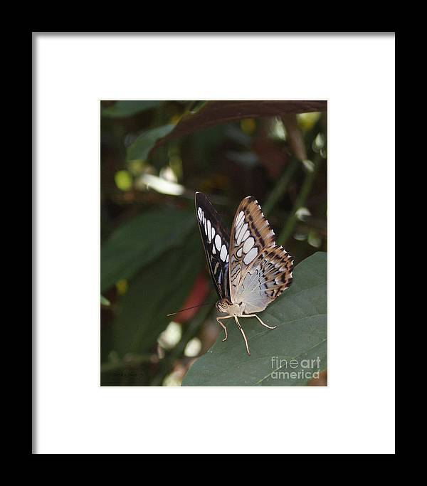Butterfly Framed Print featuring the photograph Hints Of Blue by Shelley Jones