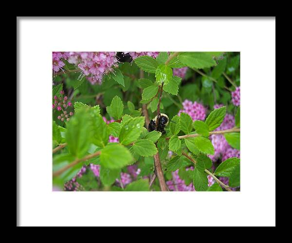 Bumble Bee Garden Dew Flowers Nature Framed Print featuring the photograph His Good Side by Anna Villarreal Garbis