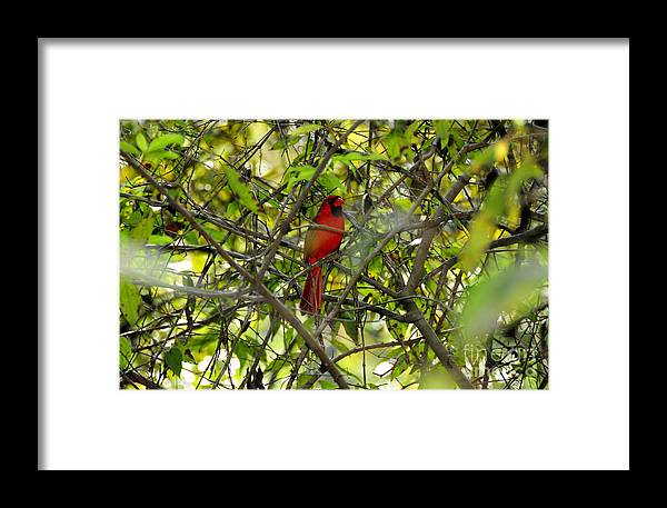 Red Framed Print featuring the photograph His Majesty by David Lee Thompson