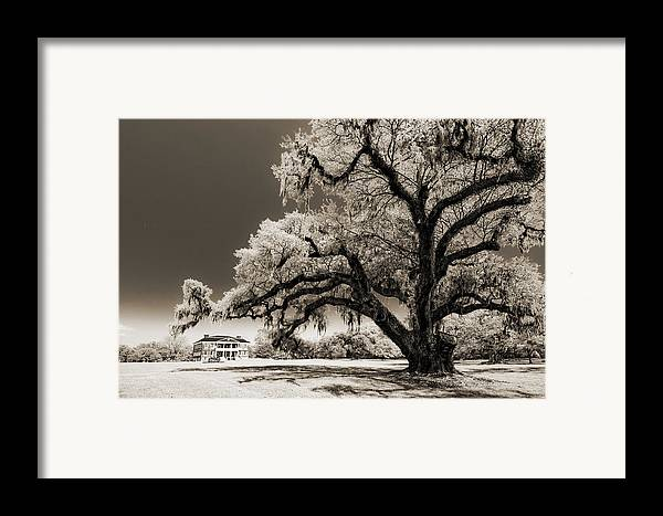 Historic Framed Print featuring the photograph Historic Drayton Hall In Charleston South Carolina Live Oak Tree by Dustin K Ryan