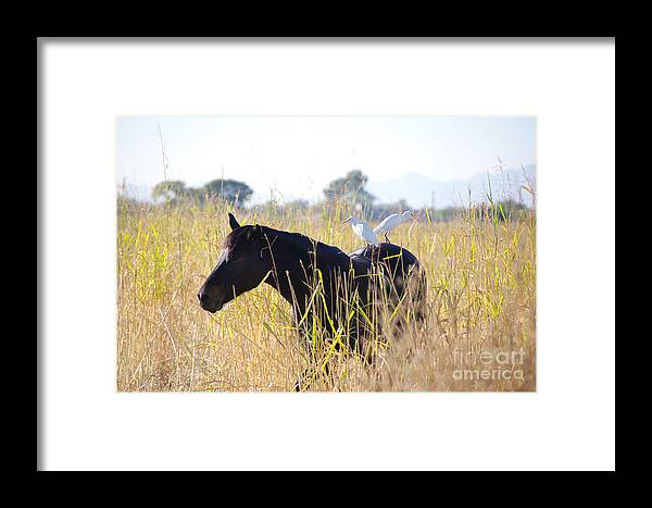 Horse Framed Print featuring the photograph Hitchhikers by Kenneth Hess