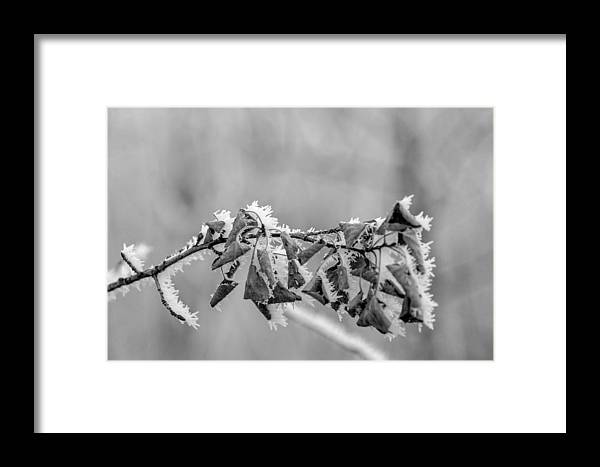Frost On Leaves Framed Print featuring the photograph Hoir Frost On Leaves by Richard Mitchell