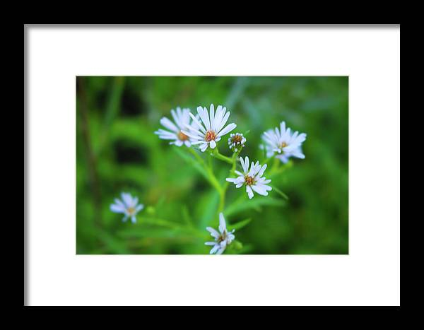 Flowers Framed Print featuring the photograph Holding On by Calyse Knox