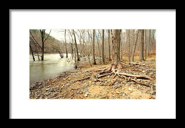 Tree Framed Print featuring the photograph Holding On by Cj Mainor