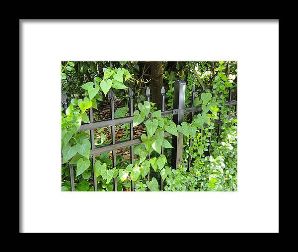Valentines From God Framed Print featuring the photograph Holding To The Vine by Libba Maddry
