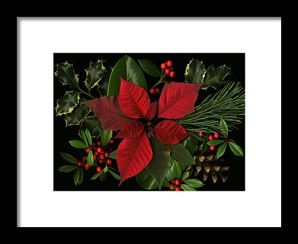 Poinsetta Framed Print featuring the photograph Holiday Greenery by Deborah J Humphries