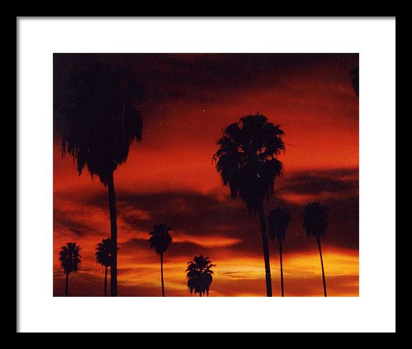 Palm Trees Framed Print featuring the photograph Hollywood Sunset by Jennifer Ott
