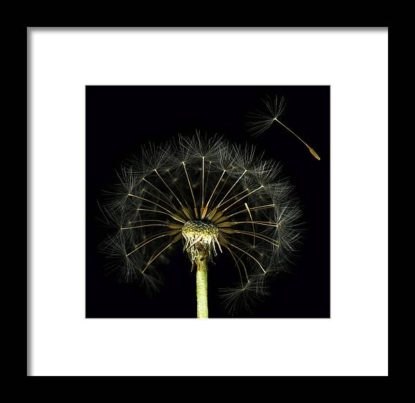 Scanography Framed Print featuring the photograph Homage by Deborah J Humphries