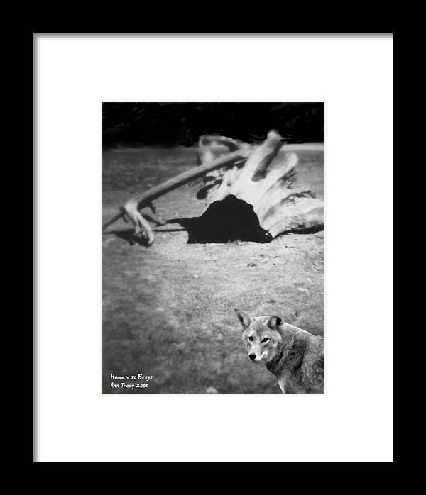 Yosemite Framed Print featuring the photograph Homage To Josef Beuys by Ann Tracy