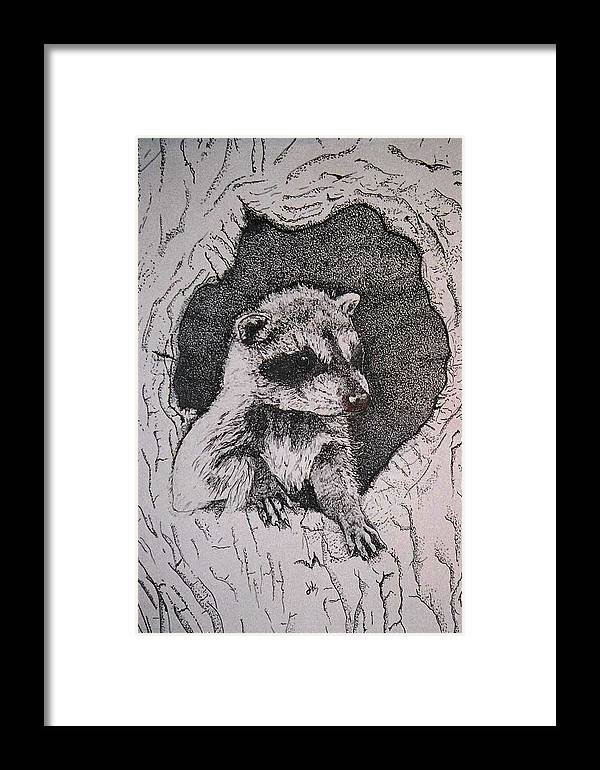 Raccoon Framed Print featuring the drawing Home by Debra Sandstrom