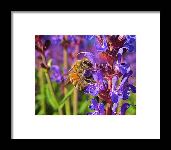 Animal Framed Print featuring the photograph Honey Bee I by Michele Stoehr