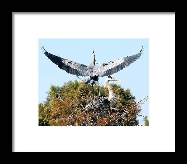 Framed Print featuring the photograph Honey Im Home by Joseph Reilly