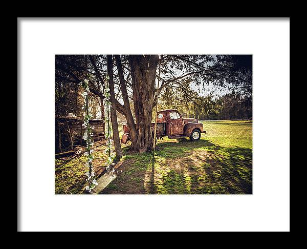 Cedar Tree Framed Print featuring the photograph Honey, Under The Cedar Tree by Cynthia Wolfe