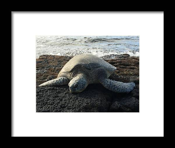 Turtle Framed Print featuring the photograph Honu by Kelly Mayfield