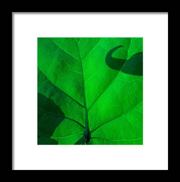 Abstract Framed Print featuring the photograph Hooked On Green by Florene Welebny