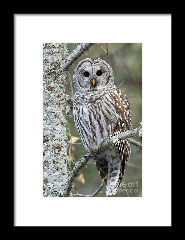Barred Owl Framed Print featuring the photograph Hoot Hoot Hoot Are You by Beve Brown-Clark Photography