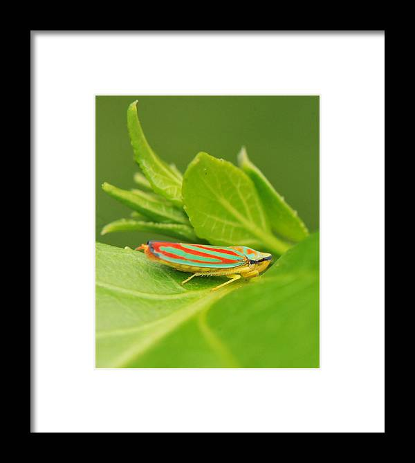 Leaf Hopper Framed Print featuring the photograph Hop On A Leaf by Michelle DiGuardi