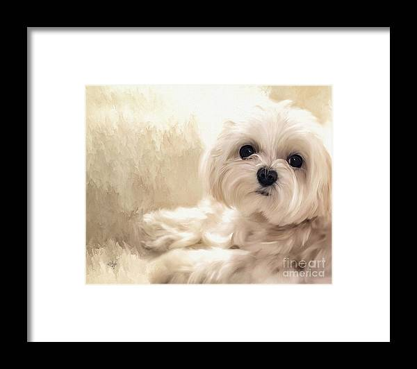 Maltese Framed Print featuring the digital art Hoping For A Cookie by Lois Bryan