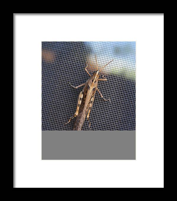 Grasshopper Framed Print featuring the photograph Hopper by Kelley King