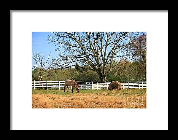 Landscape Framed Print featuring the photograph Horse And Hay by Todd Blanchard