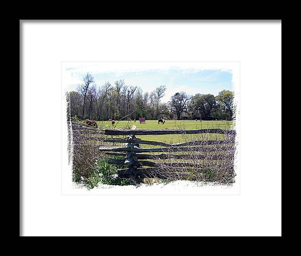 Horses Framed Print featuring the photograph Horse Farm by Ralph Perdomo