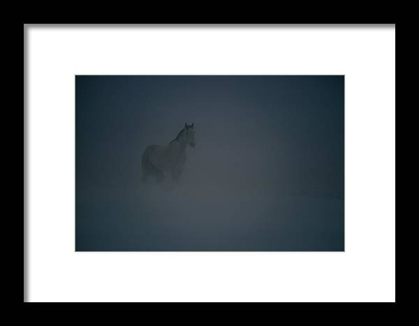 North America Framed Print featuring the photograph Horse In A Snowstorm Near Boggs by Paul Chesley