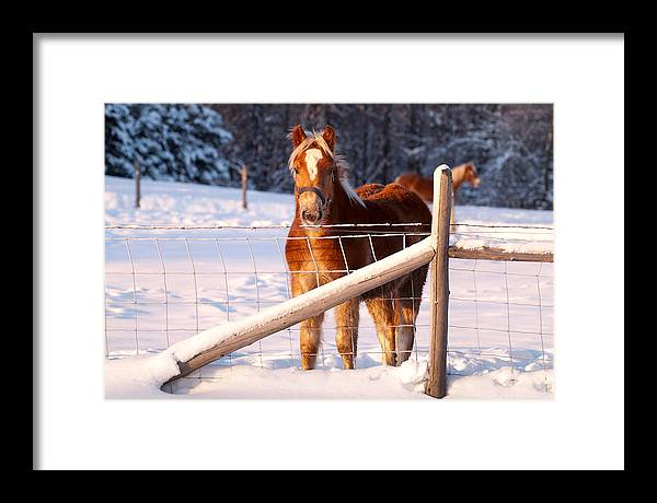 Horse Framed Print featuring the pyrography Horse In The Snow by Martin Rochefort