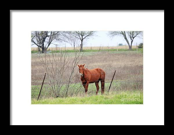 Landscape Framed Print featuring the photograph Horse by Jeff Downs