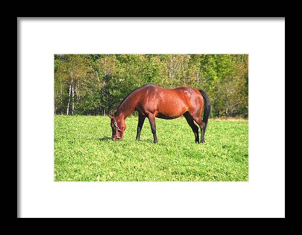 Photography Framed Print featuring the photograph Horse by Katina Cote