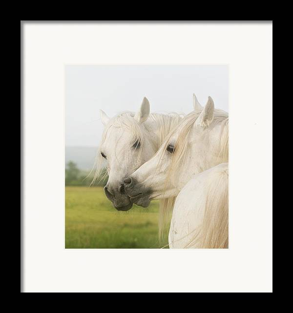 Horse Framed Print featuring the photograph Horse Kiss by ELA-EquusArt