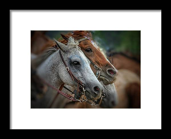 Horse Framed Print featuring the photograph Horse Pair by April Robinson