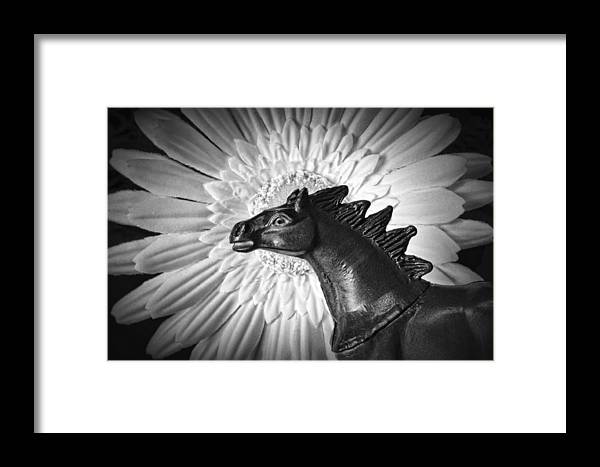 Horse Framed Print featuring the photograph Horse Startled By A Daisy by Jeff Gettis