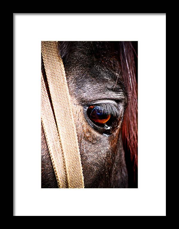 Horse Framed Print featuring the photograph Horse Tears by Keith Allen