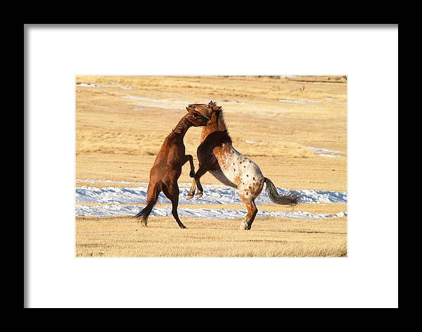 Horses Framed Print featuring the photograph Horseplay by Lauren Munger