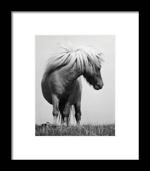 Horses Framed Print featuring the photograph Horses 1 by Stephen Harris