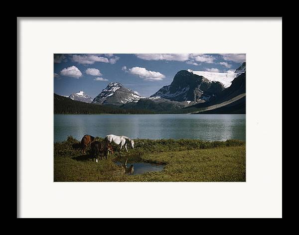 Outdoors Framed Print featuring the photograph Horses Graze In A Lakeside Meadow by Walter Meayers Edwards