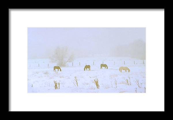 Fog; Mist; Foggy; Misty; Landscapes; Scenery; Scenic; Atmospheric; Snow; Snowy; Winter; Wintry; Cold; Seasons; Seasonal; Weather; Horses; Animals; Farming; Agricultural; Farms; Rural; Country; Farm Animals; Grazing; Grazing Horses; Field; Four Framed Print featuring the photograph Horses Grazing In A Field Of Snow And Fog by Steve Ohlsen