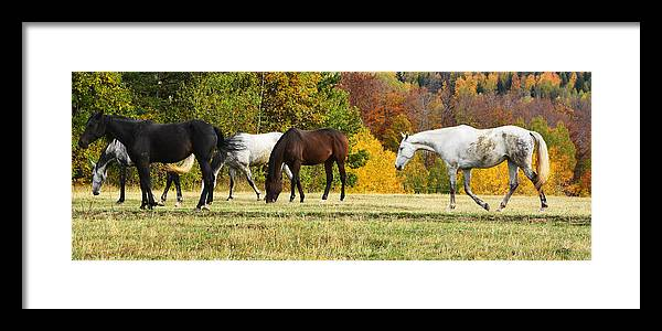 Autumn Framed Print featuring the photograph Horses In Autumn by Predrag Lukic