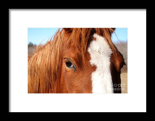 Horse Framed Print featuring the photograph Horse's Mane by Thomas Marchessault