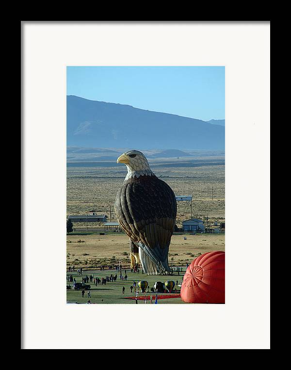 Bald Framed Print featuring the photograph Hot Air Eagle by Charles Ridgway