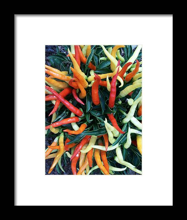 Hot Stuff Framed Print featuring the photograph Hot Hot Hot by Vijay Sharon Govender